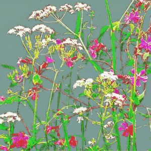 A modern botanical cow parsley art print (different colour options available)