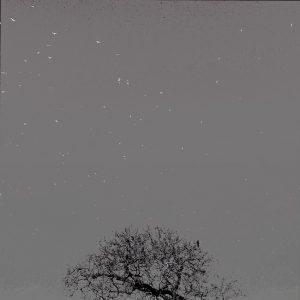 Watching the free spirits (Mink Grey)- Print