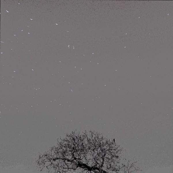 Art print birds in sky being watched ( grey)