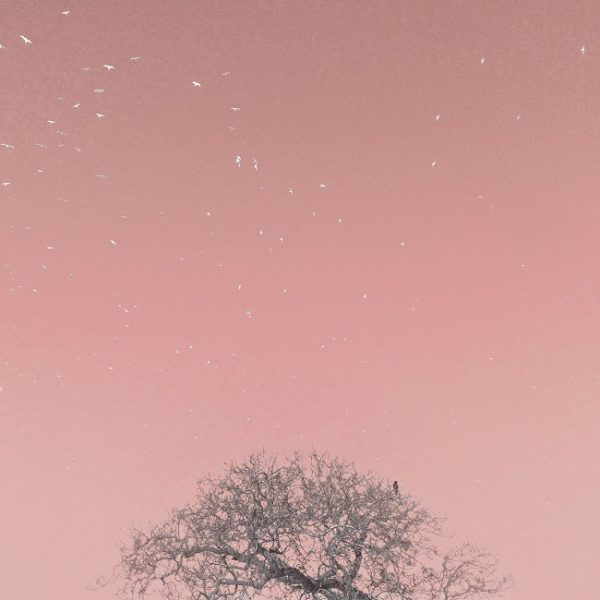 Art print birds in sky being watched ( warm pink)