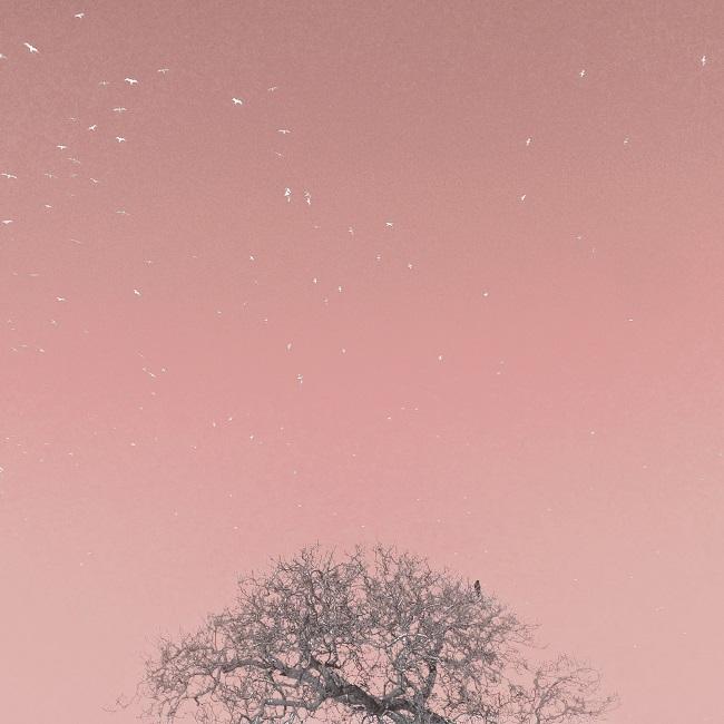 Free spirits pink Jo Sharpe small