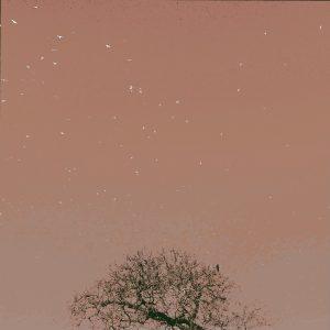 Watching the free spirits (Mocha Pink)- Print