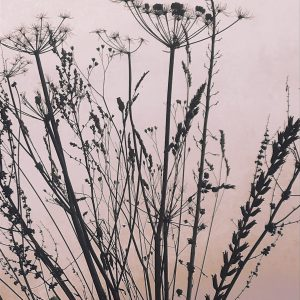 A modern botanical seedheads print available in various colourways – Pink whisper