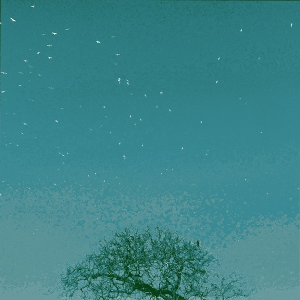 a tree and teal blue sky with birds flying