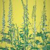 Botanical foxgloves print yellow mustard
