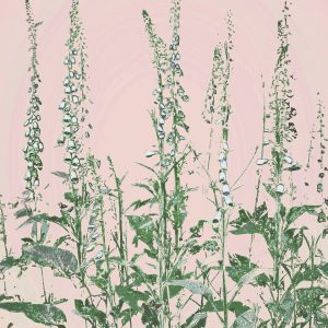 botanical foxgloves print yellow mustard from a Cornish hedgerow – A3, coral pink