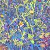 blue print wild flora