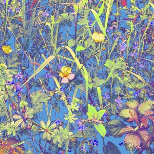 A blue print of wild flora in a Cornish Hedgerow available in various sizes