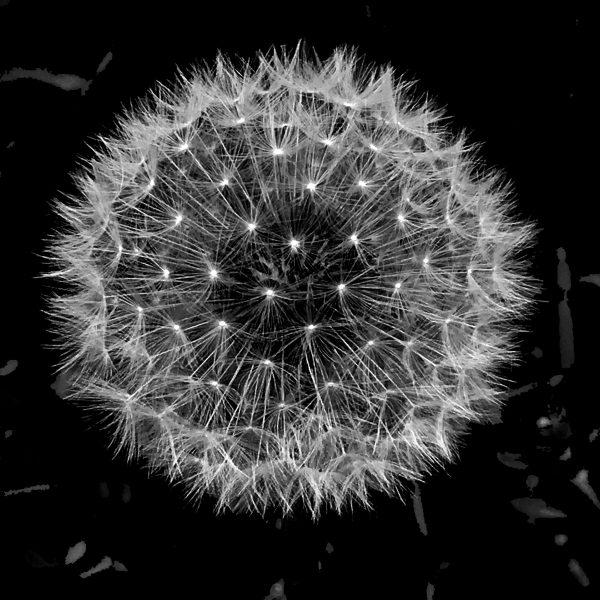 Bespoke Dandelion Seedhead Cushion