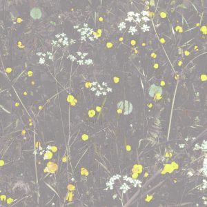 Grey and yellow cow parsley art print with yellow buttercups